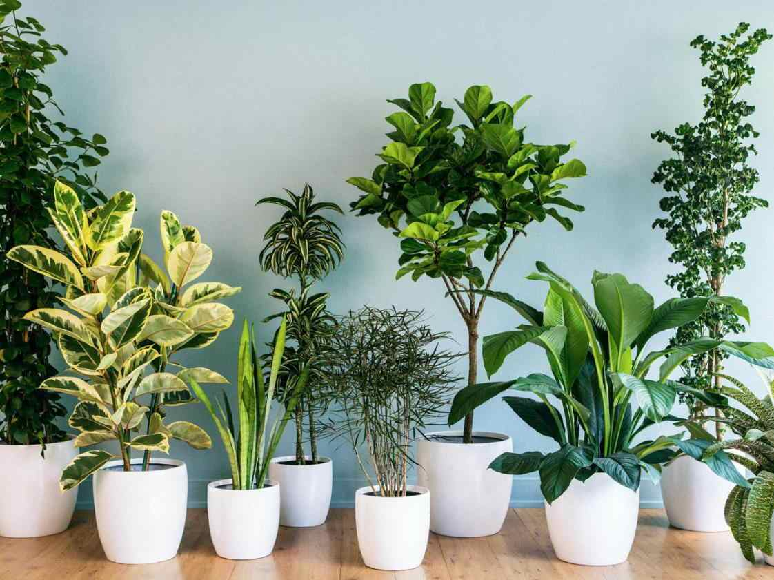 pengertian tanaman