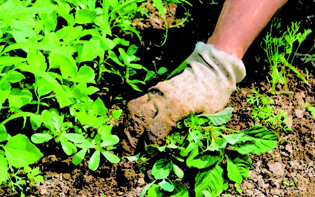 16 Cara Menghilangkan Rumput Liar dengan Ampuh