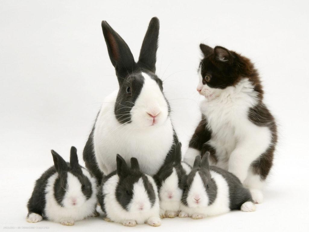 cara-merawat-kelinci
