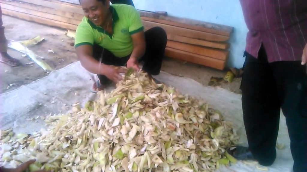 fermentasi-dari-gedebog-pisang
